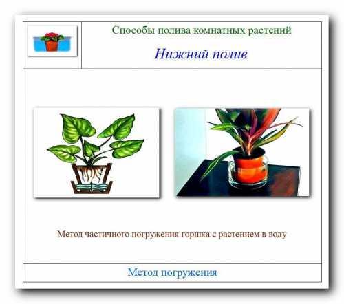 Как правильно организовать полив комнатных растений