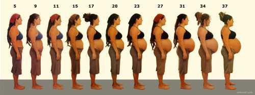 Многоплодная беременность по неделям