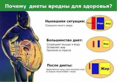 Безопасная  диета,  польза и вред для организма,