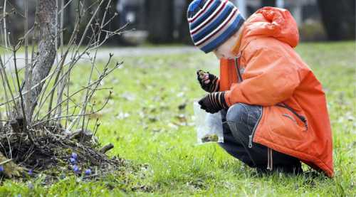 Ваш ребенок Наблюдаем за природой