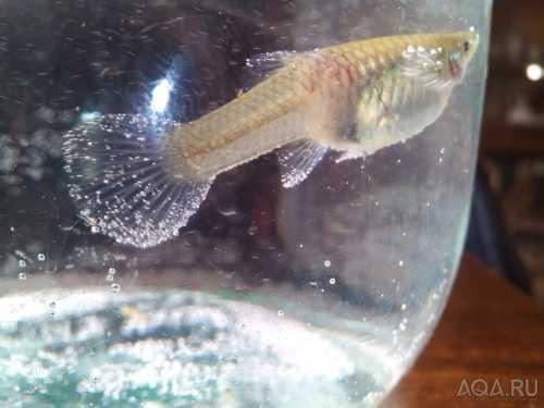 Аквариумные рыбки болезни и лечение