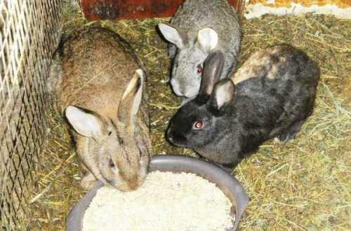 Чем кормить кролика зимой